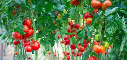 healthiest paleo diet foods