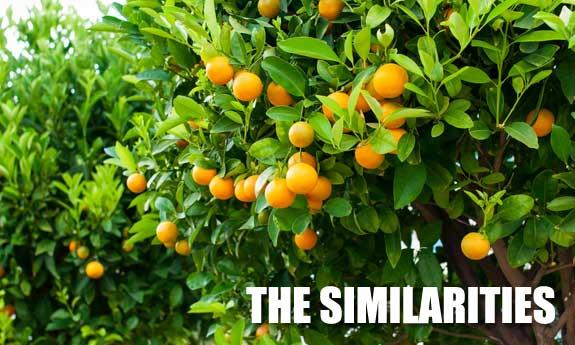 similarities between the paleo and primal diet