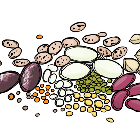 What Are Legumes & Should You Avoid Them? | Paleo Grubs