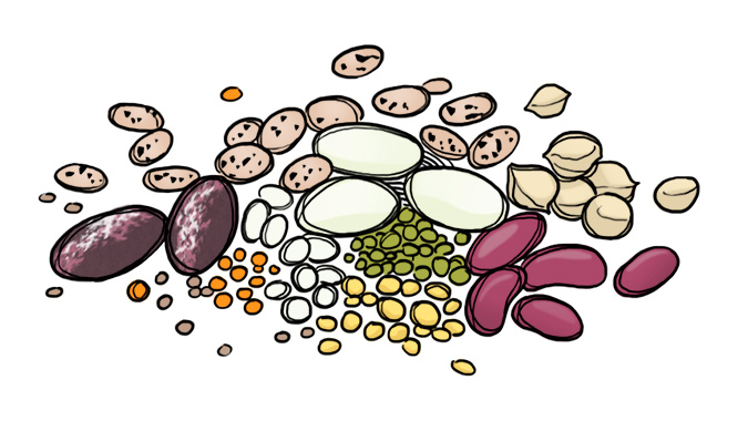 what are legumes