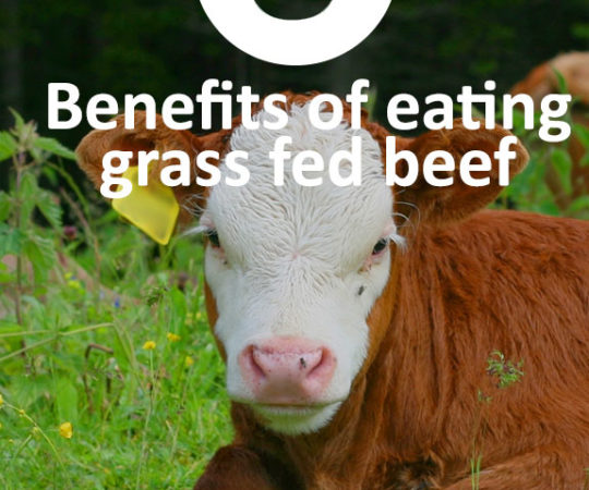 Is grass fed beef really any healthier than regular beef? Read to find out.