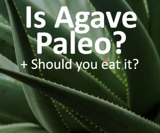 Is agave Paleo and should you eat it? Learn where agave syrup comes from, if it is paleo-friendly, and most importantly, if it is healthy or not.